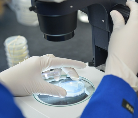 Hands of researcher working at microscope